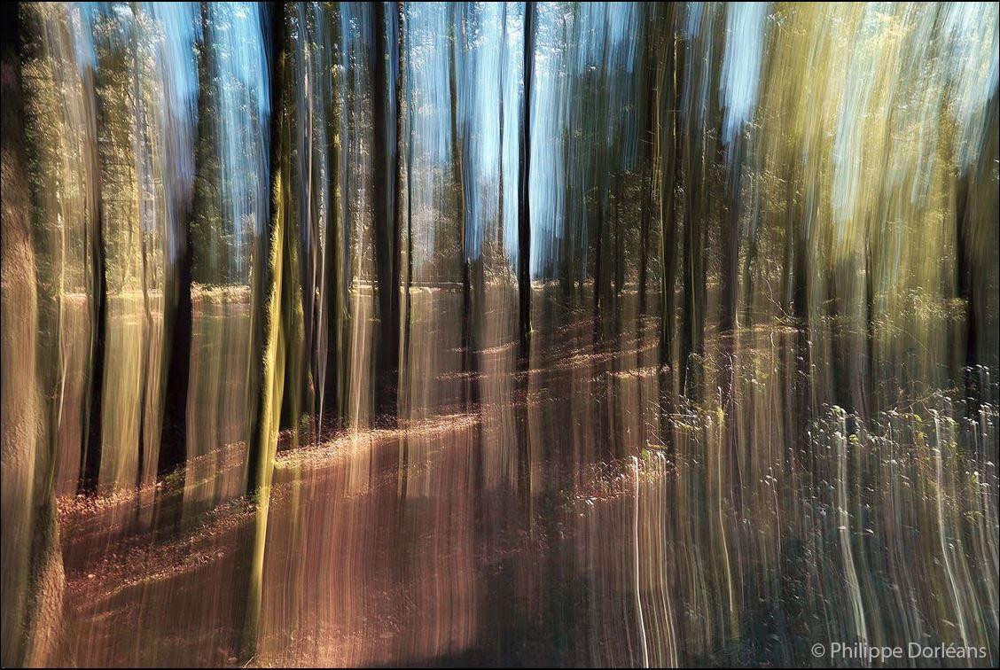 1 Orfèvre (Forêt d'Écouves. Transparence)