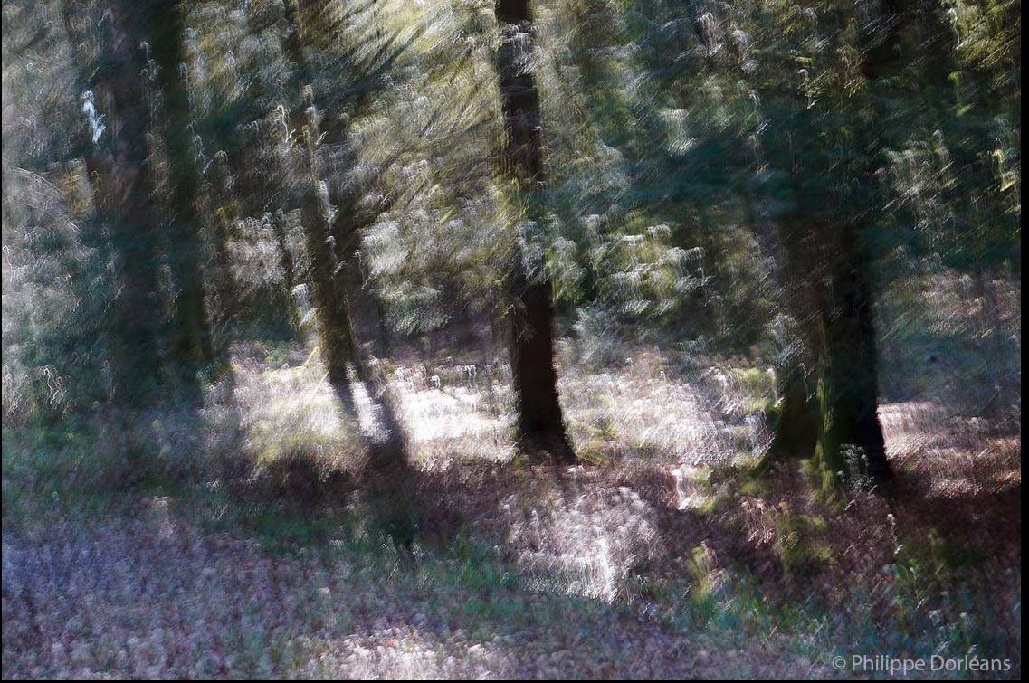 5 Souvenirs (Forêt d'Écouves)